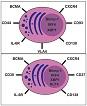 2018 12 01 - Plasma cells