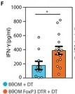 Diet modulates colonic T cell-a